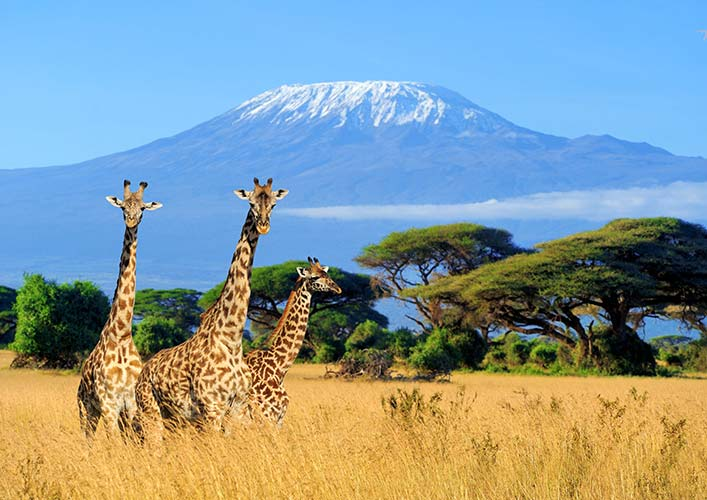 Kenya Travel Offers